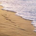 A Pane e pomodoro arriva la messa in spiaggia