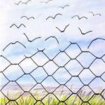 La strada verso la libertà…